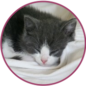 1_small-kitten.png